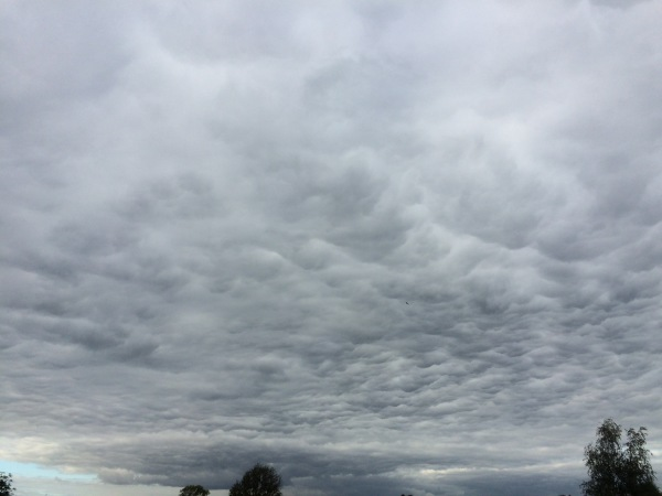 Mammatus on stratocumulus?